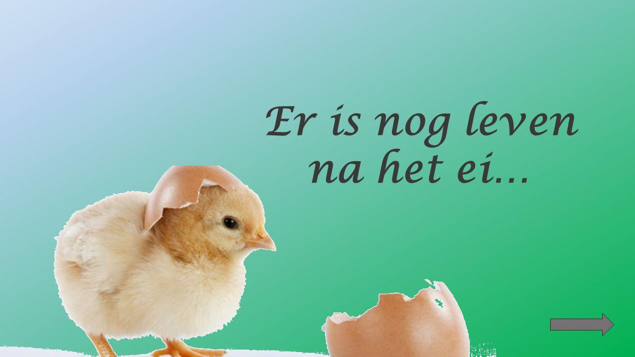 Plaats volgende tekeningen in de juiste volgorde De dooier is bevrucht (3 dagen) De kip bebroedt het ei.