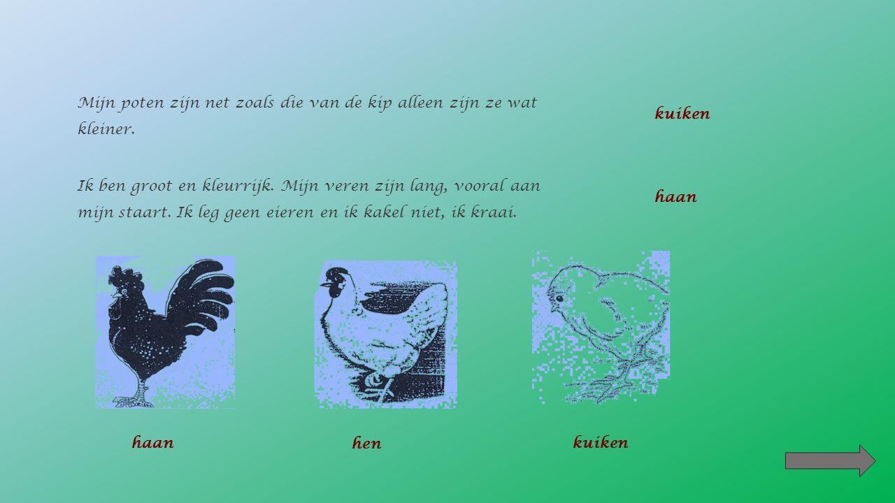 Na 6 dagen zie je de vrucht.De dooier is bevrucht (3 dagen) 1 De kip bebroedt het ei.