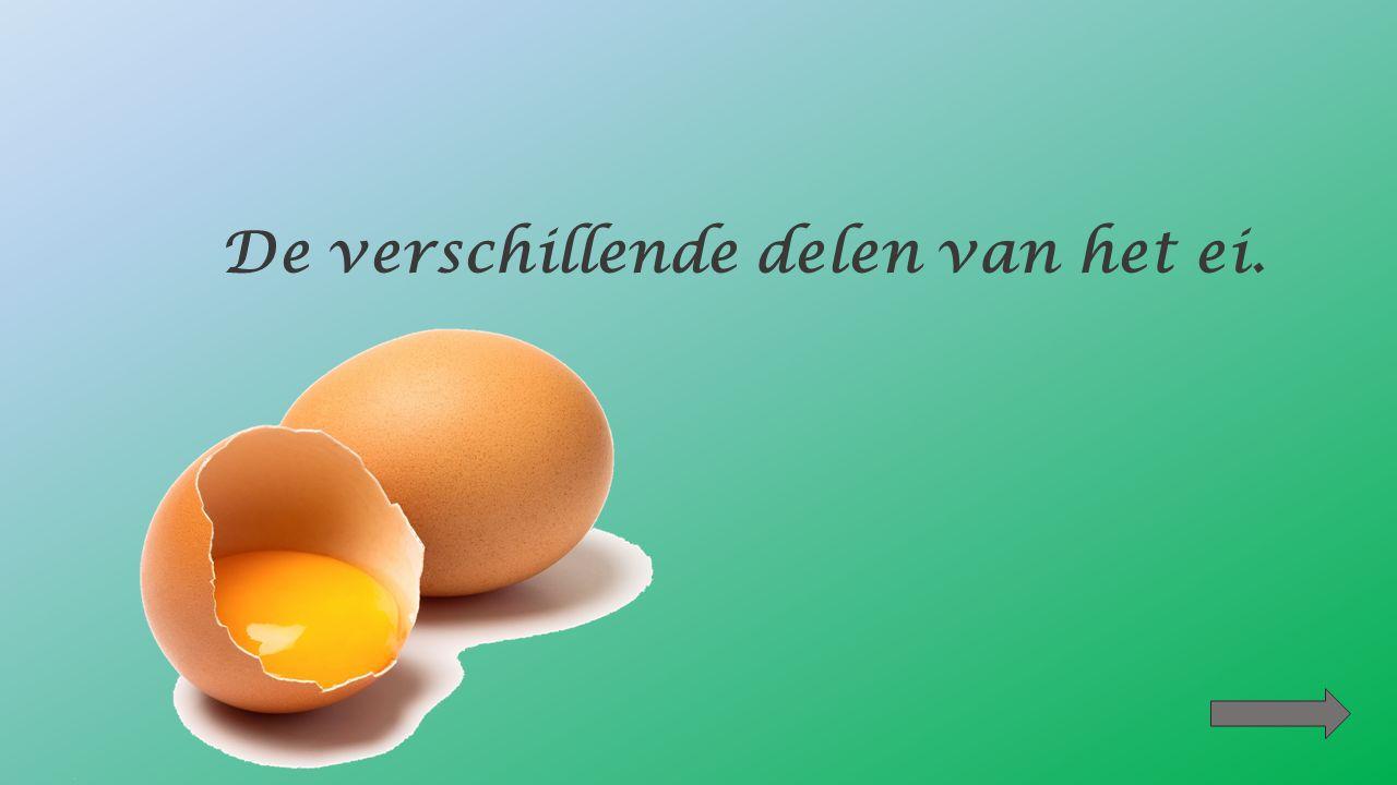 De kip bebroedt het ei.