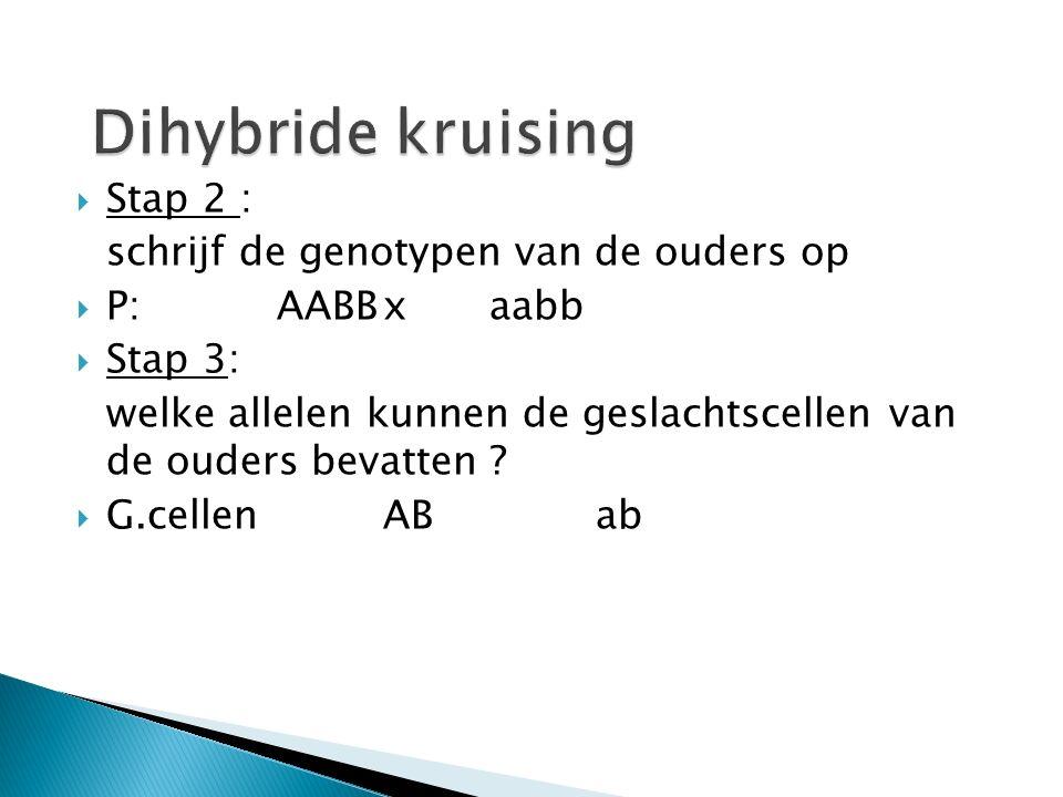  De kans op aa bij de kruising Aa x Aa is 1/4  De kans op bb Bij de kruising Bb x Bb is ook 1/4  Hoe groot is de kans op aabb bij de kruising AaBb x AaBb ?