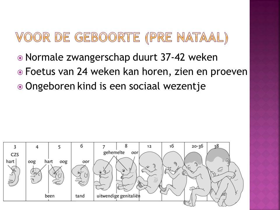  Normale zwangerschap duurt 37-42 weken  Foetus van 24 weken kan horen, zien en proeven  Ongeboren kind is een sociaal wezentje