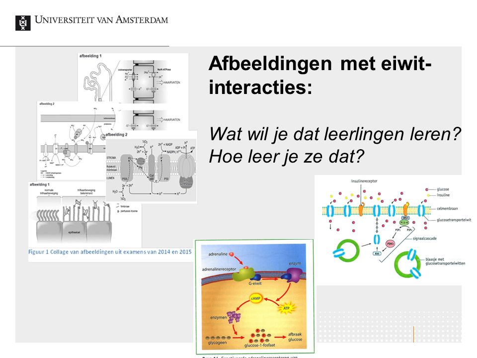 Afbeeldingen met eiwit- interacties: Wat wil je dat leerlingen leren? Hoe leer je ze dat?