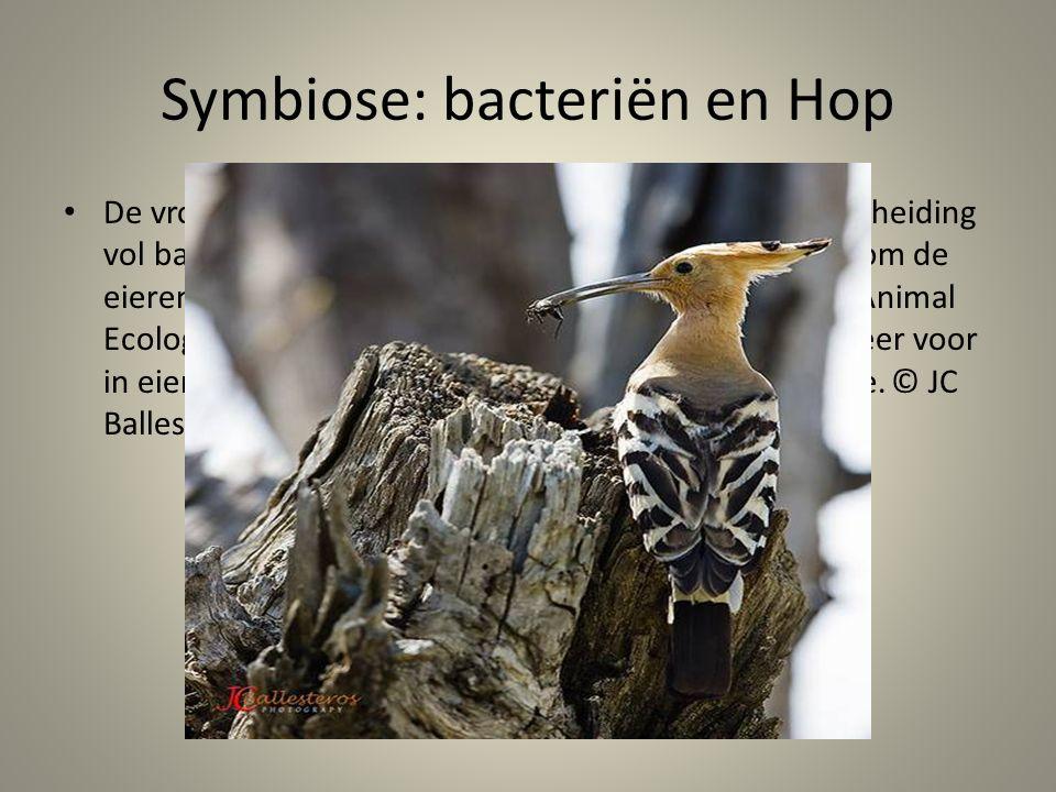 Symbiose: bacteriën en Hop De vrouwtjeshop beschermt haar eieren met een afscheiding vol bacteriën die het embryo beschermen en helpen om de eieren su