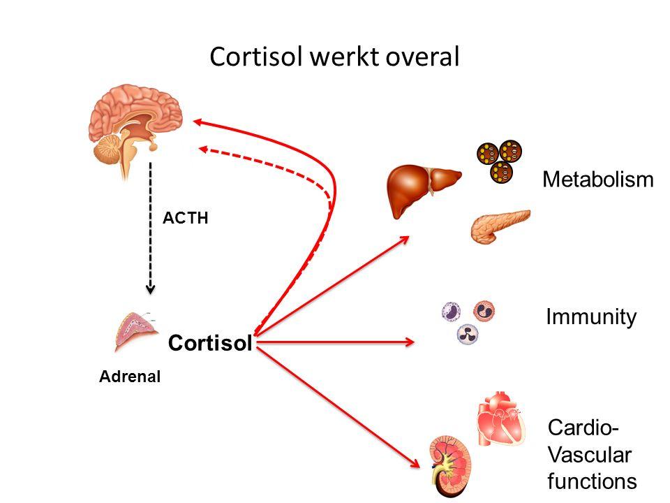 Adrenal Cortisol ACTH Metabolism Immunity Cardio- Vascular functions Cortisol werkt overal