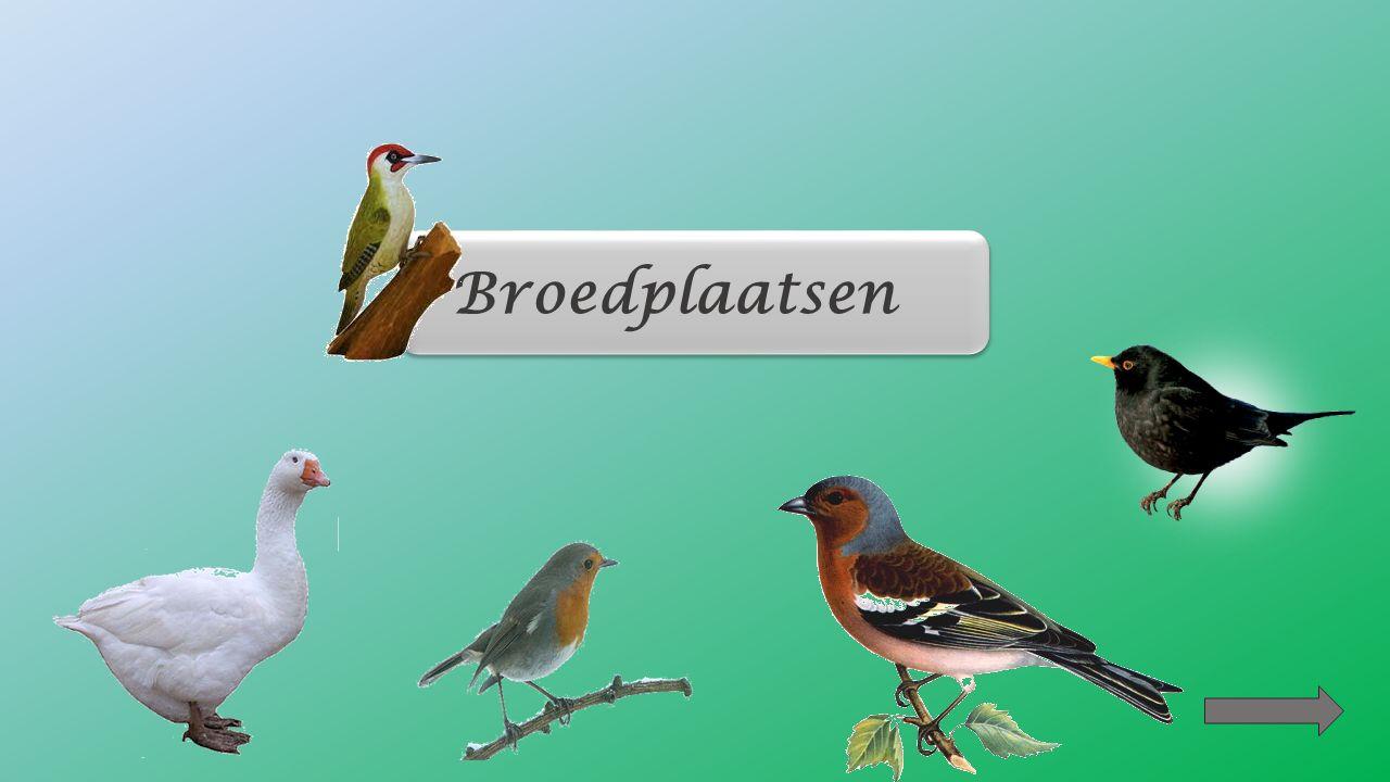 Vogels die in groep wonen/leven zijn kolonievogels. De blauwe reiger, de zwaluw, de aalscholver zijn vogels die in groep leven. Deze vogels hebben een