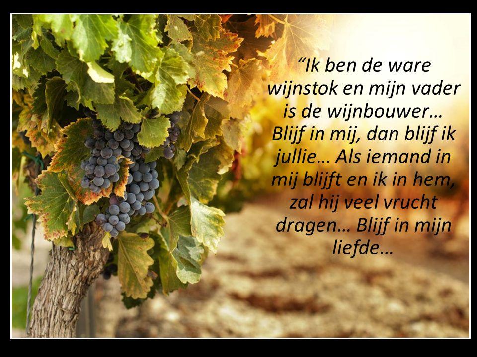 Ik ben de ware wijnstok en mijn vader is de wijnbouwer… Blijf in mij, dan blijf ik jullie… Als iemand in mij blijft en ik in hem, zal hij veel vrucht dragen… Blijf in mijn liefde…
