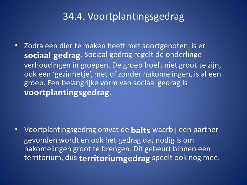 34.4. Voortplantingsgedrag Zodra een dier te maken heeft met soortgenoten, is er sociaal gedrag. Sociaal gedrag regelt de onderlinge verhoudingen in g