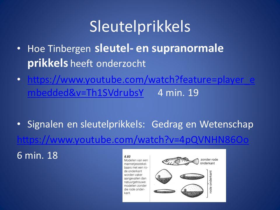 Sleutelprikkels Hoe Tinbergen sleutel- en supranormale prikkels heeft onderzocht https://www.youtube.com/watch?feature=player_e mbedded&v=Th1SVdrubsY