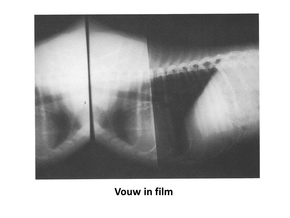 Vouw in film