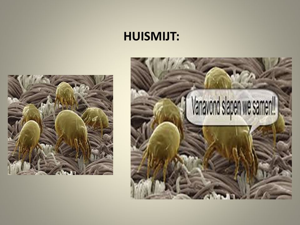 HUISMIJT: