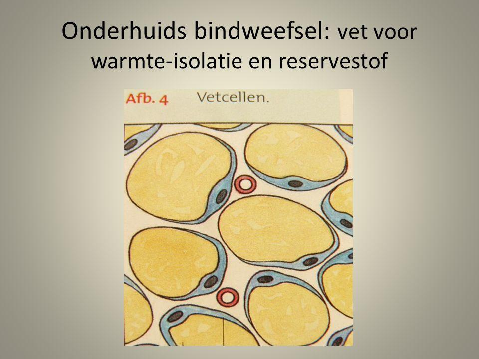 Onderhuids bindweefsel: vet voor warmte-isolatie en reservestof