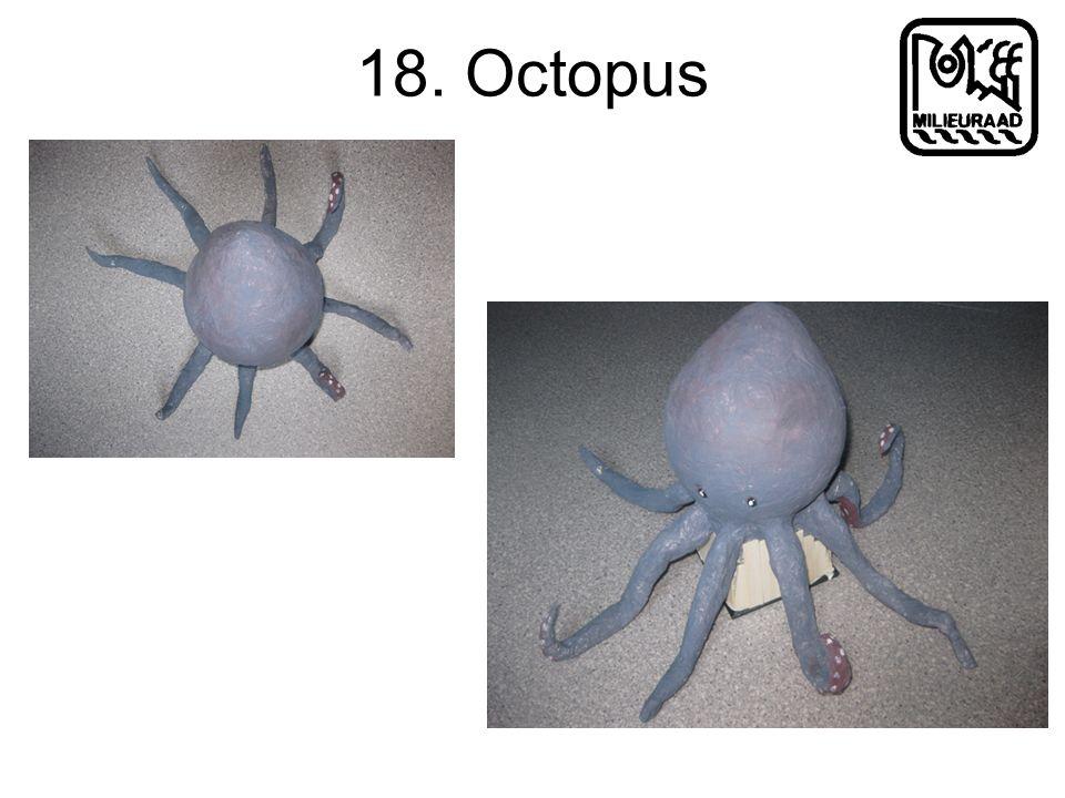 18. Octopus