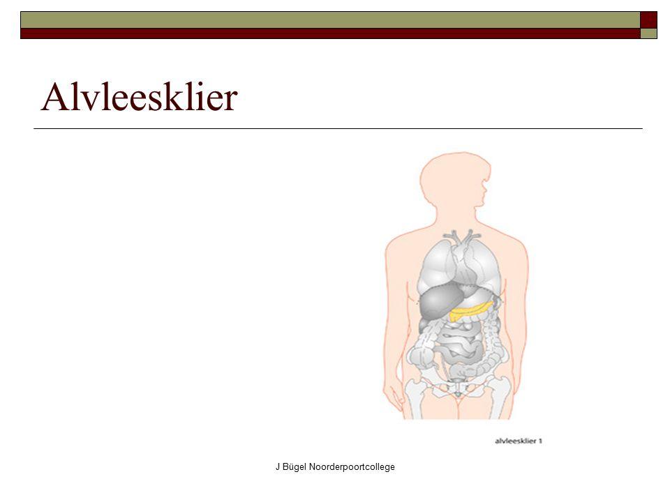J Bügel Noorderpoortcollege Alvleesklier