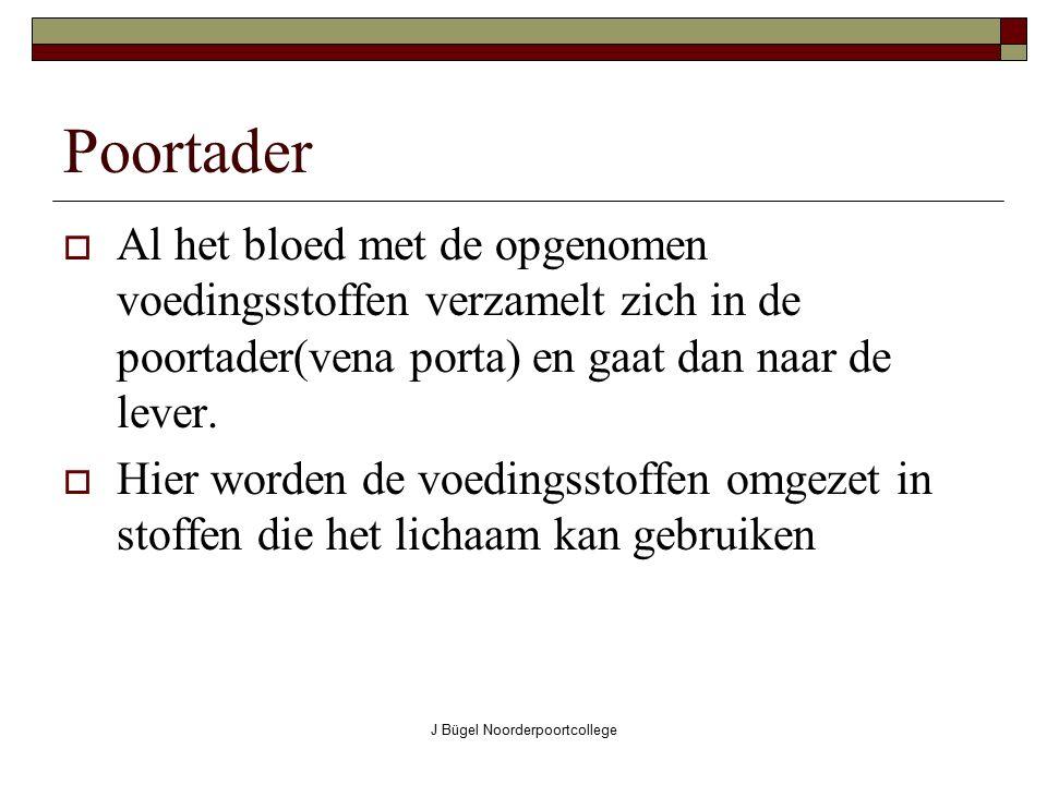 J Bügel Noorderpoortcollege Poortader  Al het bloed met de opgenomen voedingsstoffen verzamelt zich in de poortader(vena porta) en gaat dan naar de l
