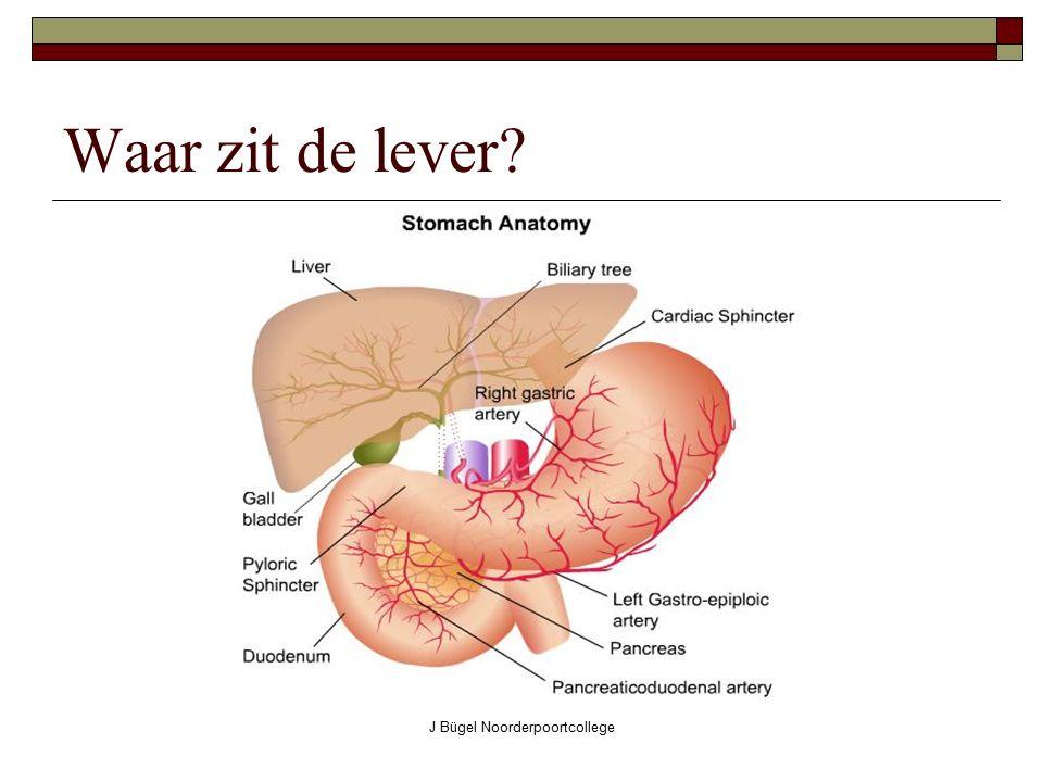 J Bügel Noorderpoortcollege Waar zit de lever?