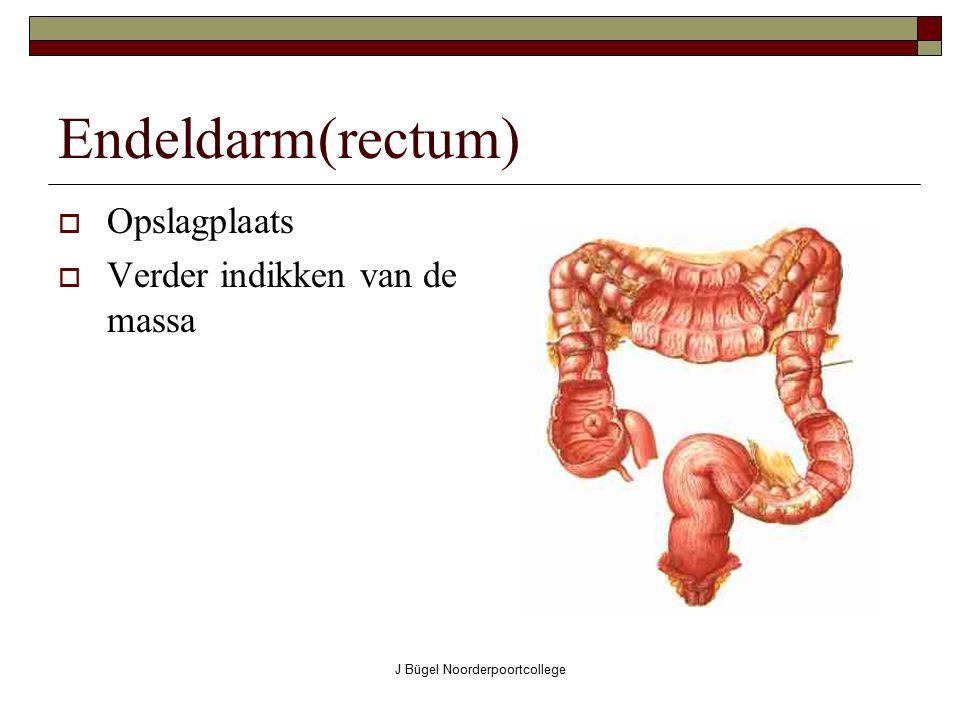 J Bügel Noorderpoortcollege Endeldarm(rectum)  Opslagplaats  Verder indikken van de massa