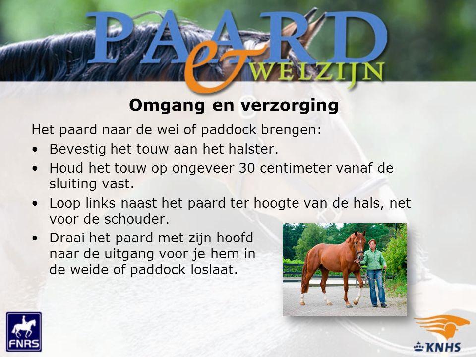 Het paard naar de wei of paddock brengen: Bevestig het touw aan het halster. Houd het touw op ongeveer 30 centimeter vanaf de sluiting vast. Loop link