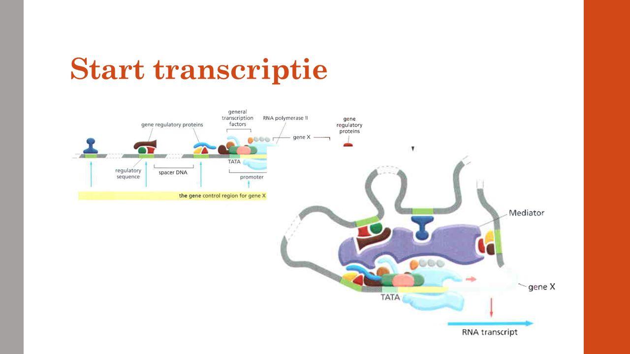 DNA-methylering Methyl groepen worden op de histonen geplaatst  DNA rolt strakker op  hierdoor kan RNA polymerase niet binden  gen uit.