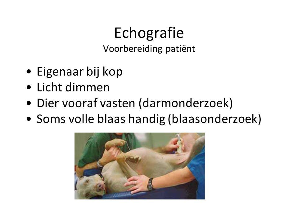 Echografie Voorbereiding patiënt Eigenaar bij kop Licht dimmen Dier vooraf vasten (darmonderzoek) Soms volle blaas handig (blaasonderzoek)