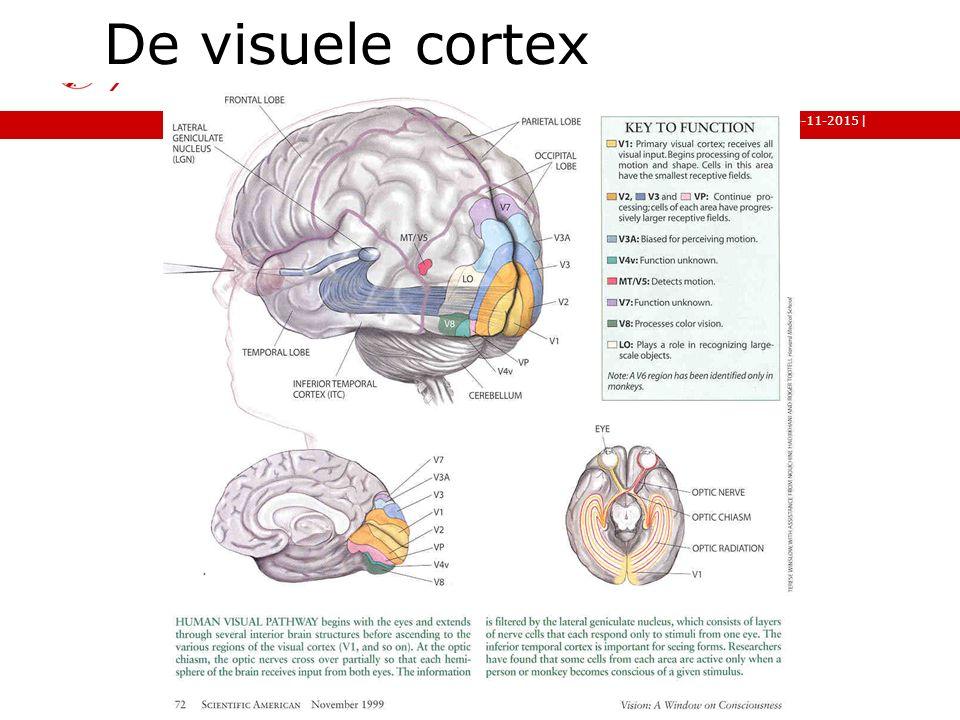 | faculteit gedrags- en maatschappijwetenschappen 6-11-2015 13 De visuele cortex