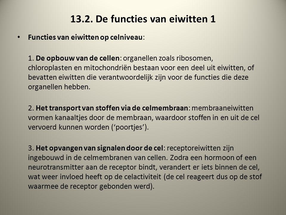 13.2. De functies van eiwitten 1 Functies van eiwitten op celniveau: 1. De opbouw van de cellen: organellen zoals ribosomen, chloroplasten en mitochon