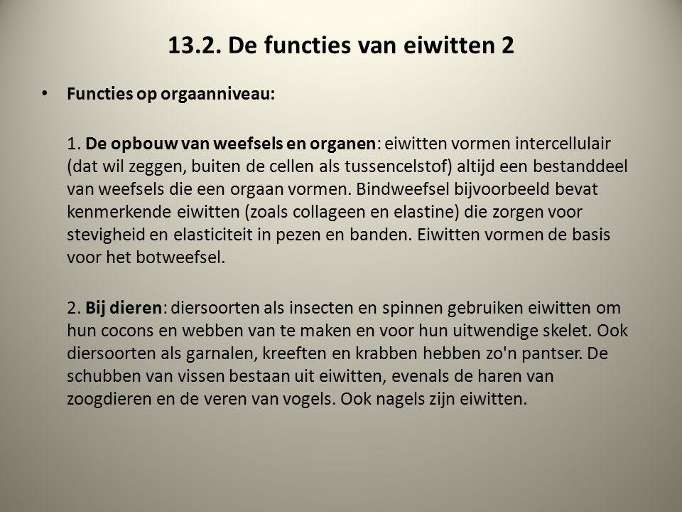 13.2. De functies van eiwitten 2 Functies op orgaanniveau: 1. De opbouw van weefsels en organen: eiwitten vormen intercellulair (dat wil zeggen, buite