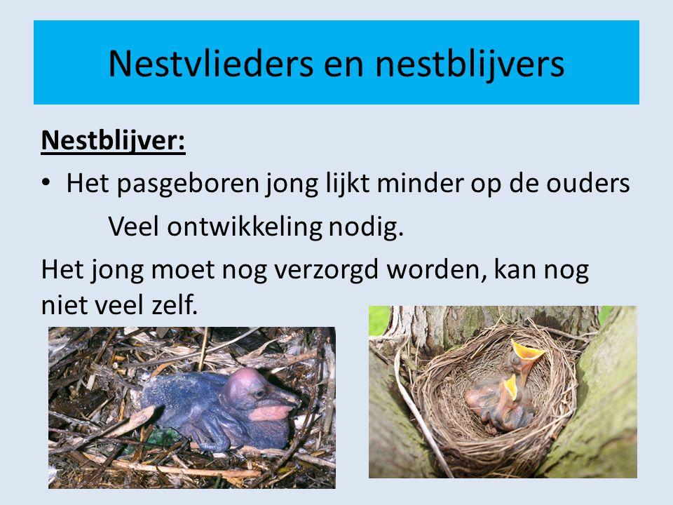 Nestvlieders en nestblijvers Nestblijver: Het pasgeboren jong lijkt minder op de ouders Veel ontwikkeling nodig. Het jong moet nog verzorgd worden, ka