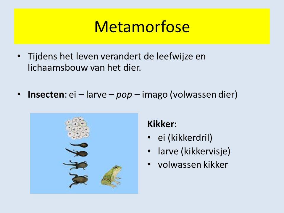 Metamorfose Tijdens het leven verandert de leefwijze en lichaamsbouw van het dier. Insecten: ei – larve – pop – imago (volwassen dier) Kikker: ei (kik