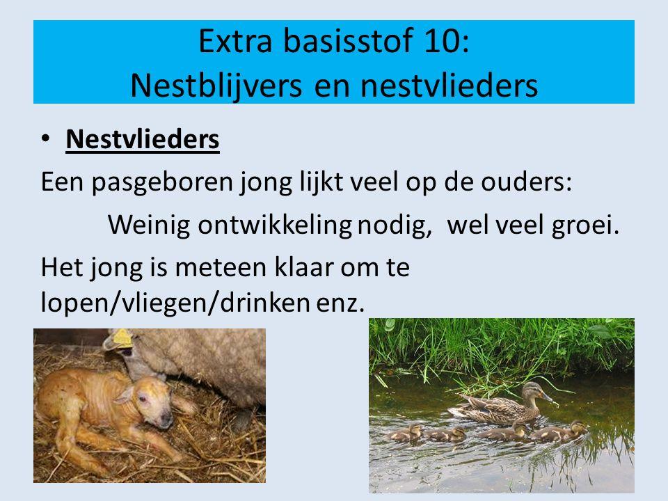 Extra basisstof 10: Nestblijvers en nestvlieders Nestvlieders Een pasgeboren jong lijkt veel op de ouders: Weinig ontwikkeling nodig, wel veel groei.