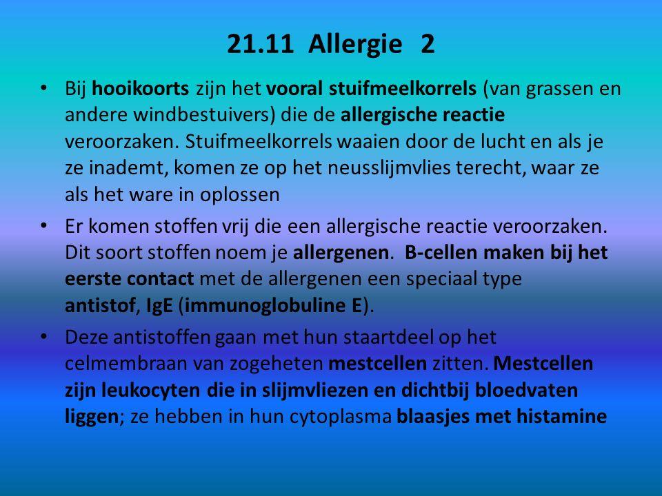 21.11 Allergie 2 Bij hooikoorts zijn het vooral stuifmeelkorrels (van grassen en andere windbestuivers) die de allergische reactie veroorzaken.