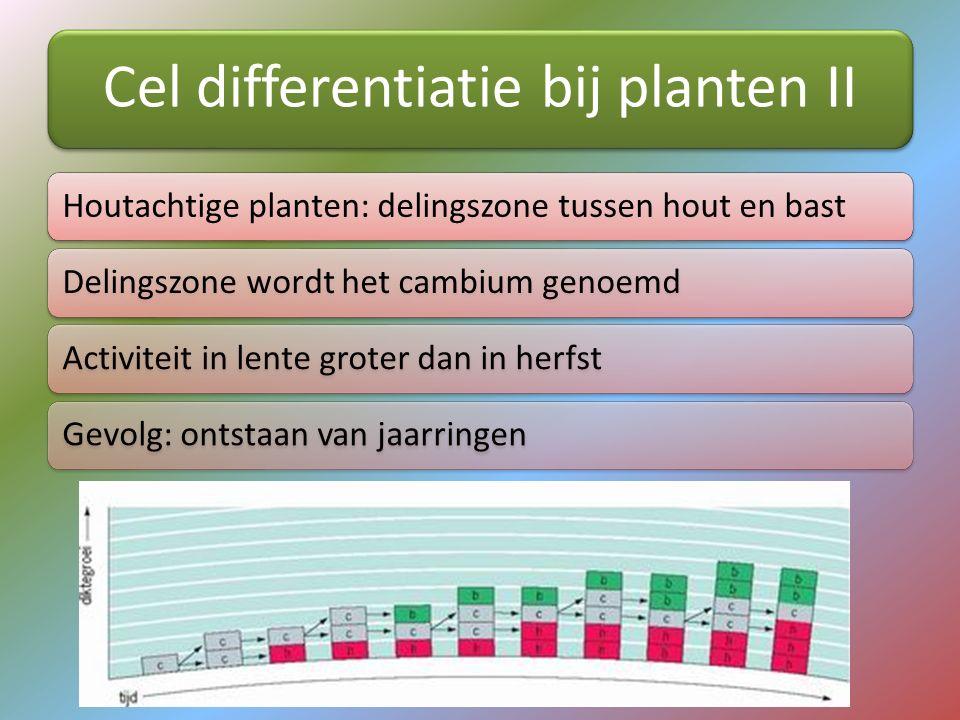 Cel differentiatie bij planten II Houtachtige planten: delingszone tussen hout en bastDelingszone wordt het cambium genoemdActiviteit in lente groter
