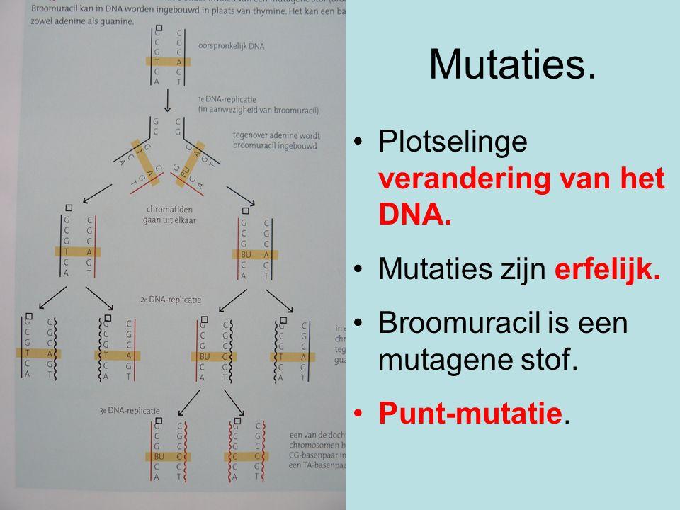 Mutaties. Plotselinge verandering van het DNA. Mutaties zijn erfelijk. Broomuracil is een mutagene stof. Punt-mutatie.