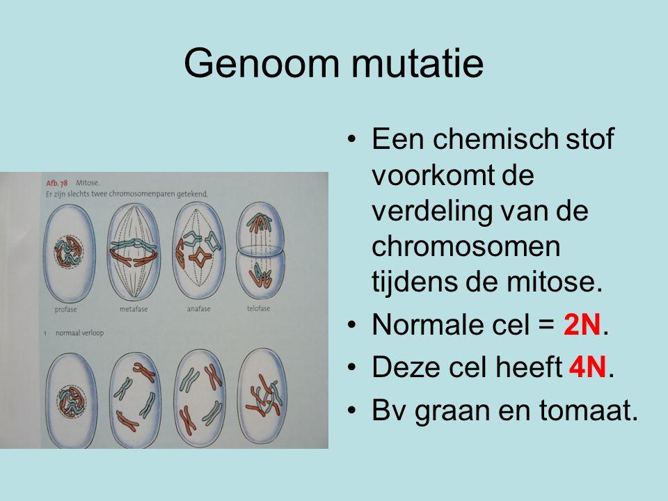 Genoom mutatie Een chemisch stof voorkomt de verdeling van de chromosomen tijdens de mitose. Normale cel = 2N. Deze cel heeft 4N. Bv graan en tomaat.