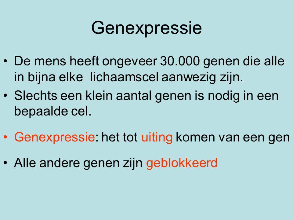 Genexpressie De mens heeft ongeveer 30.000 genen die alle in bijna elke lichaamscel aanwezig zijn. Slechts een klein aantal genen is nodig in een bepa