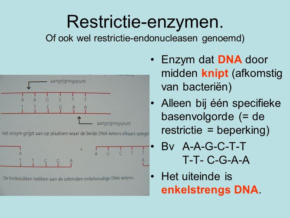 Restrictie-enzymen. Of ook wel restrictie-endonucleasen genoemd) Enzym dat DNA door midden knipt (afkomstig van bacteriën) Alleen bij één specifieke b