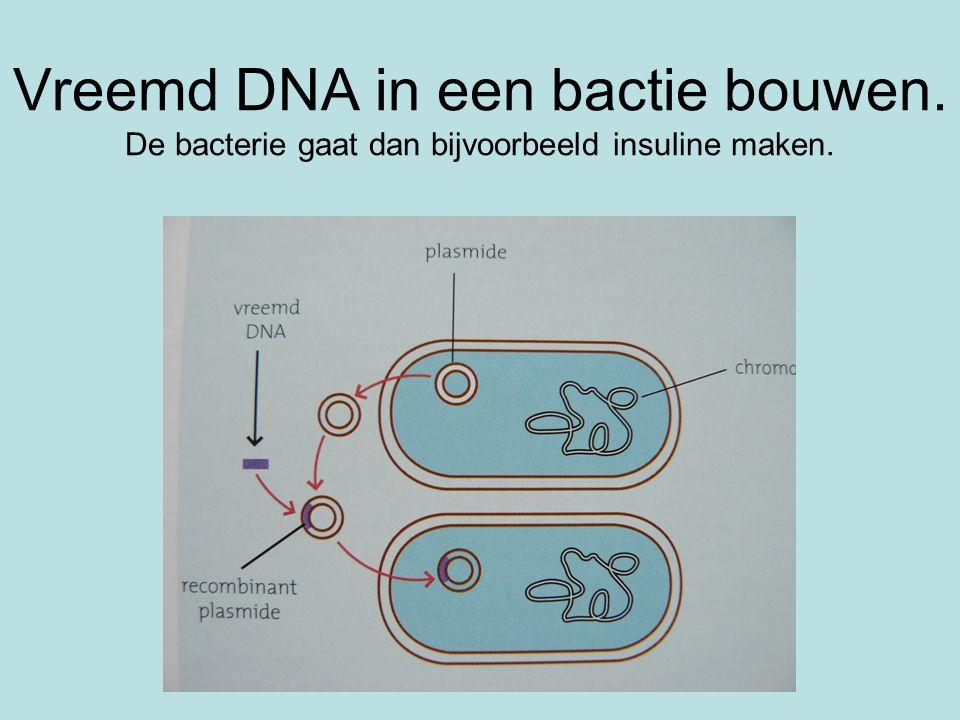 Vreemd DNA in een bactie bouwen. De bacterie gaat dan bijvoorbeeld insuline maken.