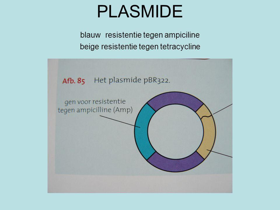 PLASMIDE blauw resistentie tegen ampiciline beige resistentie tegen tetracycline