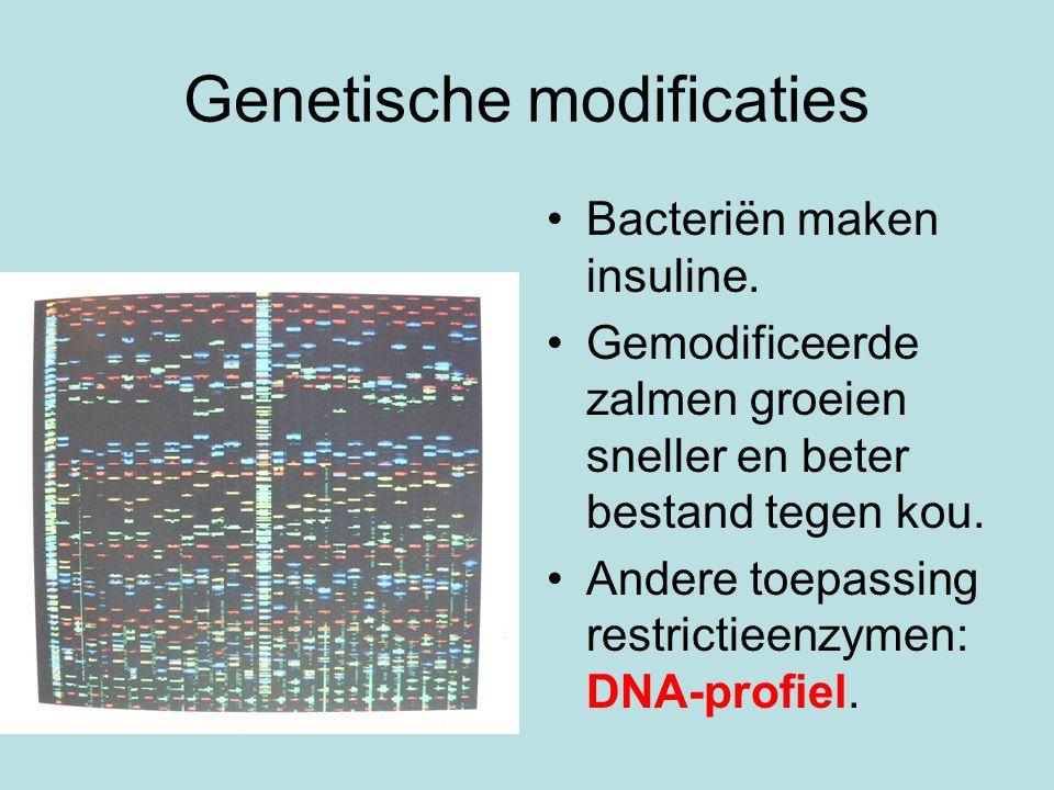 Genetische modificaties Bacteriën maken insuline. Gemodificeerde zalmen groeien sneller en beter bestand tegen kou. Andere toepassing restrictieenzyme