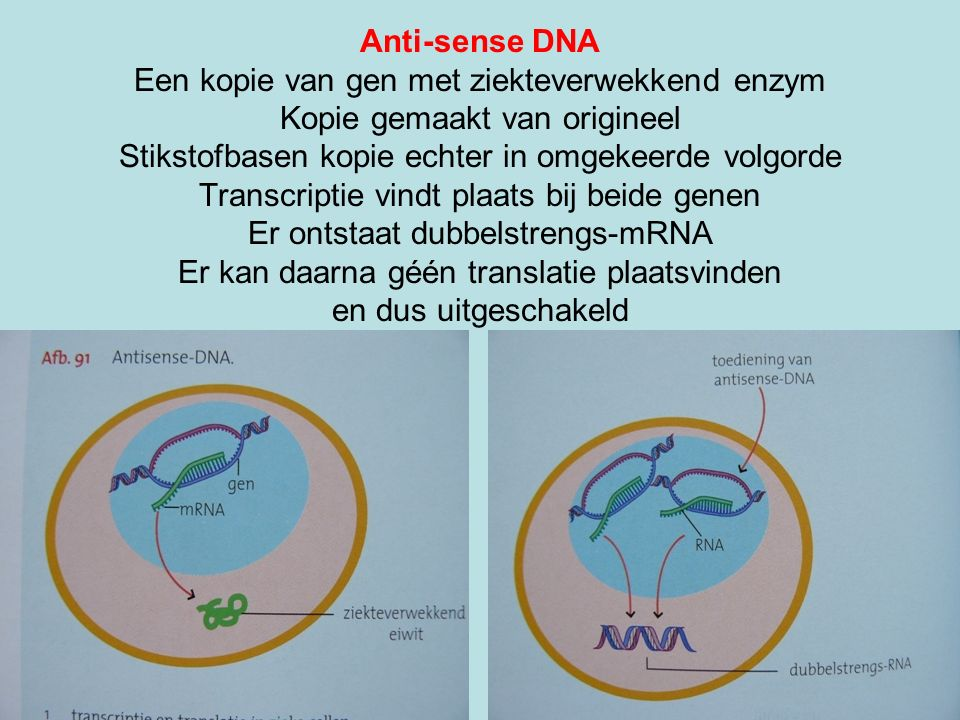 Anti-sense DNA Een kopie van gen met ziekteverwekkend enzym Kopie gemaakt van origineel Stikstofbasen kopie echter in omgekeerde volgorde Transcriptie