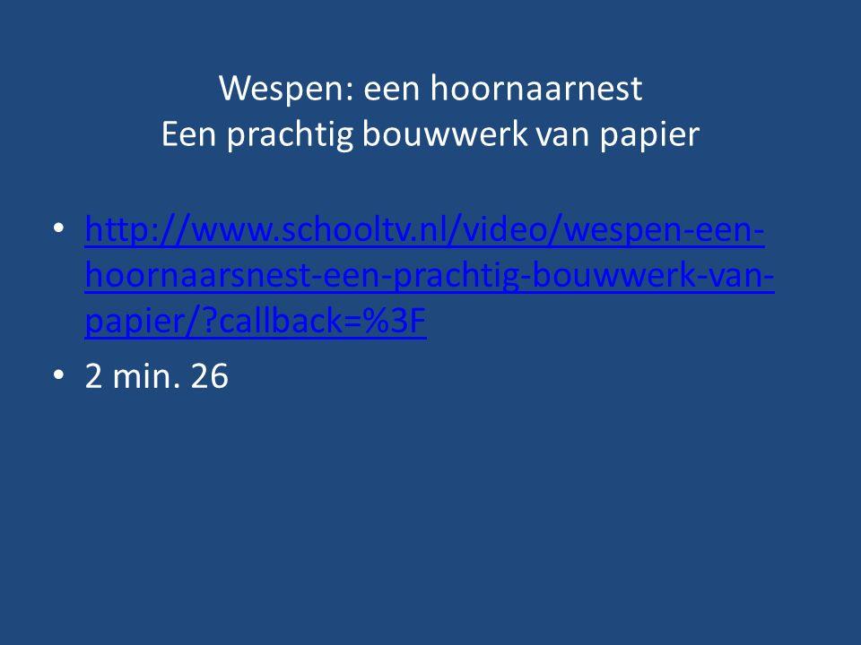 Wespen: een hoornaarnest Een prachtig bouwwerk van papier http://www.schooltv.nl/video/wespen-een- hoornaarsnest-een-prachtig-bouwwerk-van- papier/?callback=%3F http://www.schooltv.nl/video/wespen-een- hoornaarsnest-een-prachtig-bouwwerk-van- papier/?callback=%3F 2 min.