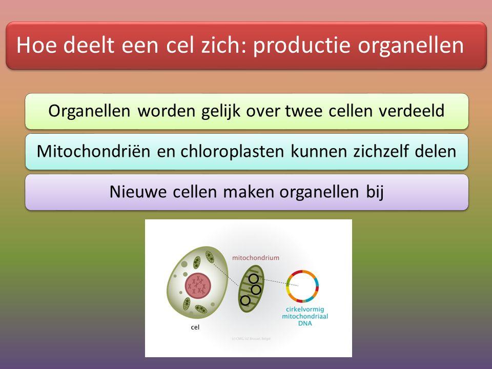Hoe deelt een cel zich: productie organellen Organellen worden gelijk over twee cellen verdeeldMitochondriën en chloroplasten kunnen zichzelf delenNie