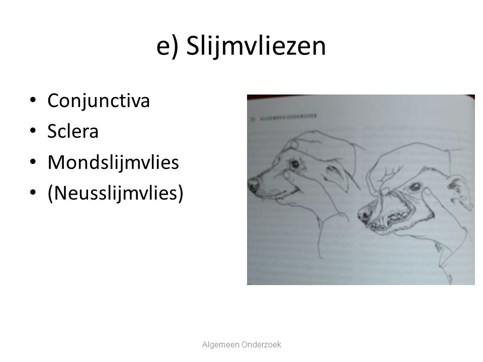 e) Slijmvliezen Conjunctiva Sclera Mondslijmvlies (Neusslijmvlies) Algemeen Onderzoek