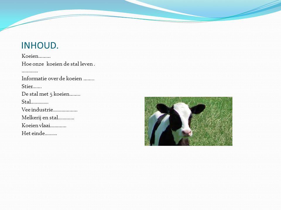 INHOUD.Koeien……… Hoe onze koeien de stal leven. ………… Informatie over de koeien ……..