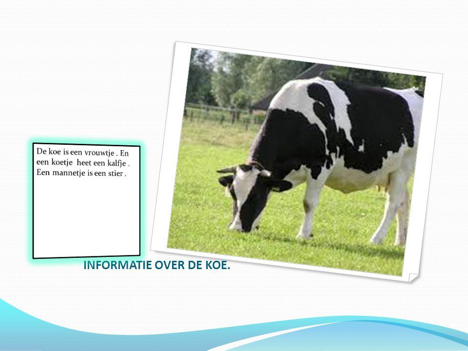 Stier De stier is het mannetje van de koe.