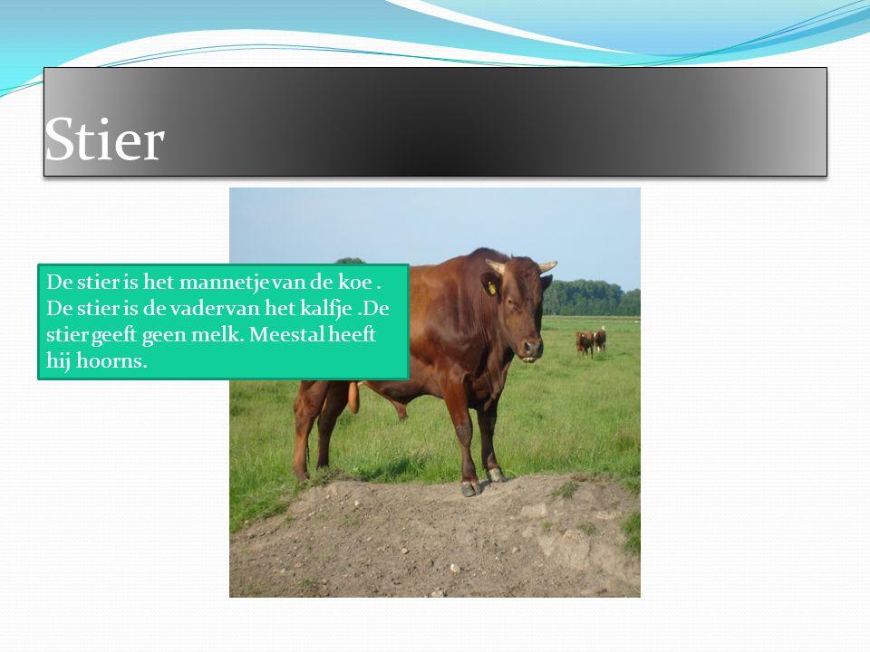 In onze stal leven wel 5 koeien. Alemaal vinden ze het leuk in onze stal. Een moeder en 4 kalfjes.