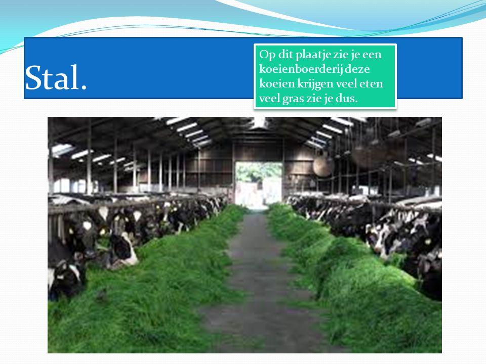 Stal. Op dit plaatje zie je een koeienboerderij deze koeien krijgen veel eten veel gras zie je dus.