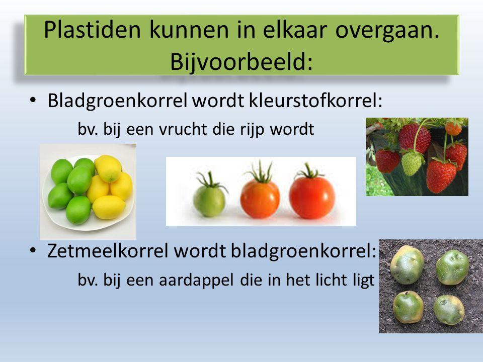 Plastiden kunnen in elkaar overgaan. Bijvoorbeeld: Bladgroenkorrel wordt kleurstofkorrel: bv.