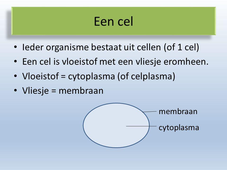 Een cel Ieder organisme bestaat uit cellen (of 1 cel) Een cel is vloeistof met een vliesje eromheen.