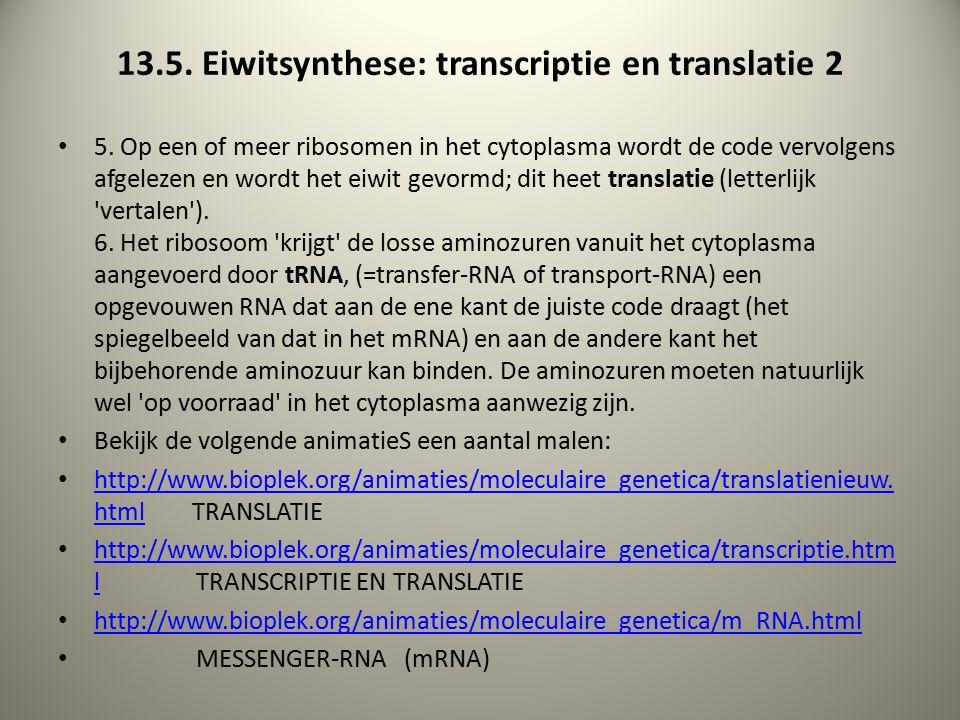 13.5. Eiwitsynthese: transcriptie en translatie 2 5.