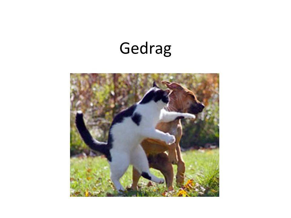 Trainen/opvoeden van een kat Dwang  onlustgevoel Kat alleen dingen te leren die hij van nature al doet Ongewenst gedrag afleren  onlustgevoel opwekken: – Plantenspuit – Geluid – Schrikreactie